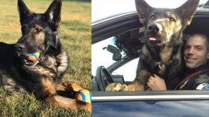 """Josh ed il cane poliziotto Lemon: """"Lui non c'è più…ma vive nei nostri ricordi"""""""