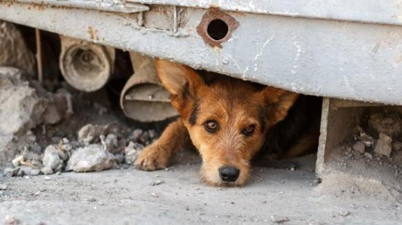Lao Mao, l'uomo che salva gli animali abbandonati a Wuhan