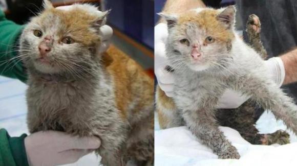 Toros, il gatto sopravvissuto al terremoto in Turchia