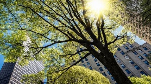 """Nascono le prime """"Tree Cities of World"""", iniziativa promossa dalla FAO"""