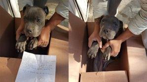 Dodicenne abbandona il suo cucciolo in un canile per proteggerlo
