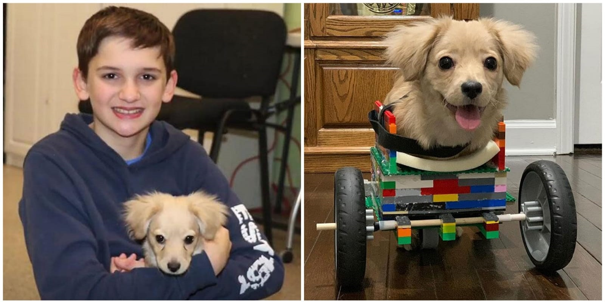 12enne costruisce sedia a rotelle coi LEGO per un cucciolo nato senza zampe anteriori