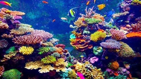 Il riscaldamento globale sta distruggendo le barriere coralline