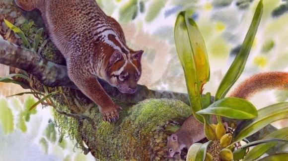 Australia, ritrovato fossile di un leone grande come un gatto