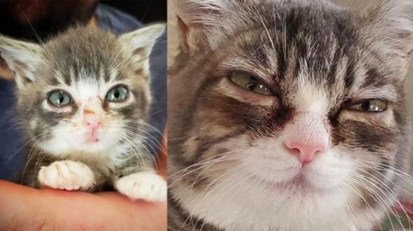 Winky, il gatto affetto da nanismo ha trovato casa