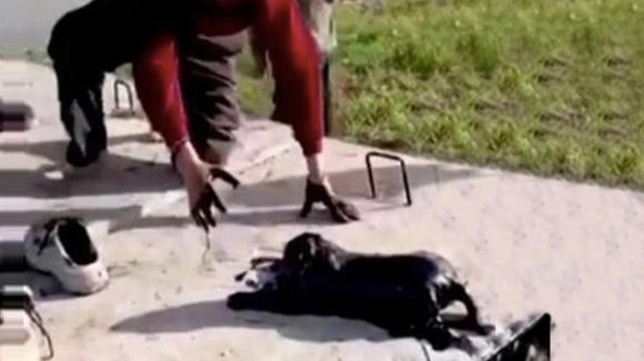 Turchia: bambino di dieci anni salva cane caduto in un pozzo petrolifero