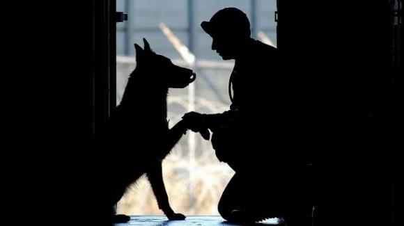 Coronavirus, nessun aumento di cani abbandonati