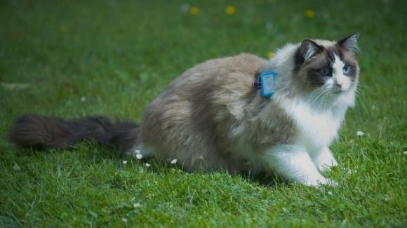 Il Cat Tracker e la vita segreta dei gatti domestici