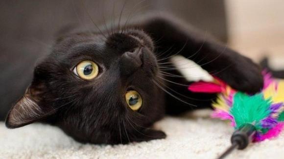 Il gatto percepisce il tumore e salva la sua proprietaria