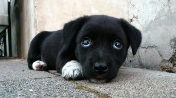 Cucciolo ferito in un incidente stradale, adottato da un agente di polizia