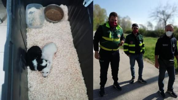 Basilicata, salvati due cuccioli abbandonati in un sacco