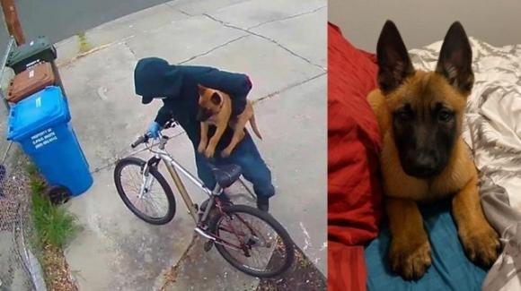 USA, rubato il cane di un'infermiera impegnata in ospedale