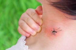Coronavirus: le zanzare trasmettono il virus? Le risposte dell'esperta