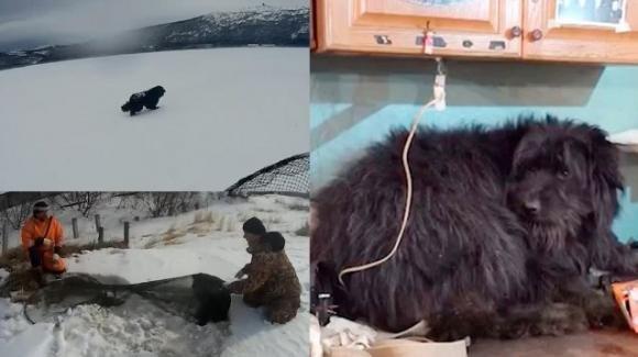 Russia, cane abbandonato da una nave aspetta invano i proprietari per due mesi