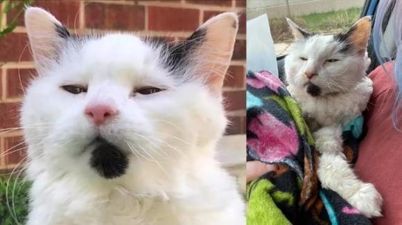 Addio al gatto Margo, il felino da record che ha vissuto 29 anni