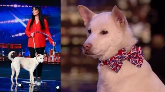 Miracle, il cane salvato dal macello e divenuto una star della tv britannica