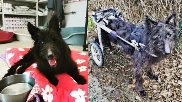 Trento, il cane disabile che ha scoperto una vita tutta nuova