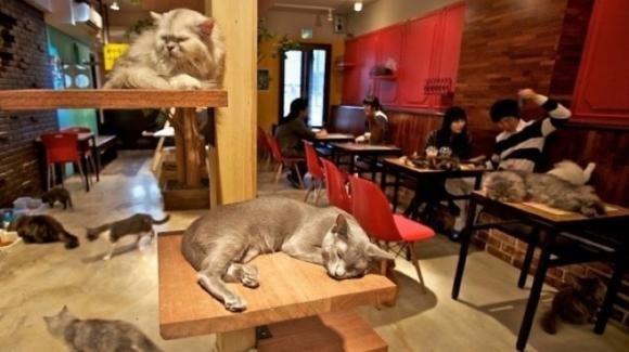 Martignacco, il cat cafè rimarrà chiuso a causa delle normative anti-Covid