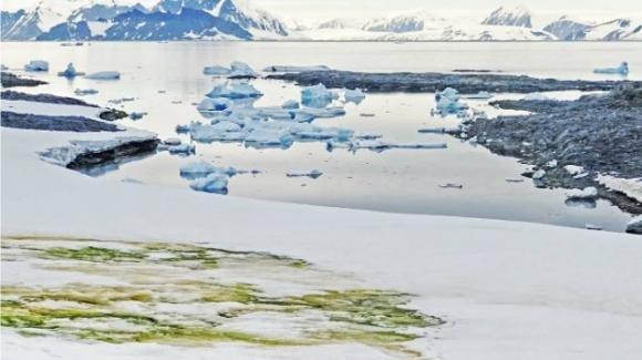 Cambiamenti climatici: in Antartide crescono le alghe sulla neve sciolta