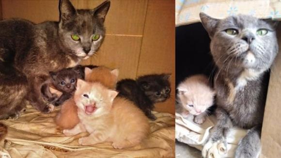 Gatto nato con una malformazione sembra fare perennemente l'occhiolino