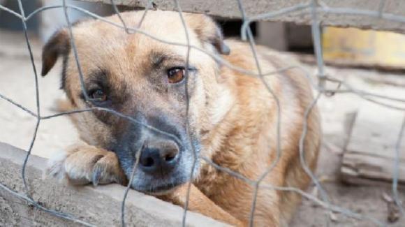 Israele, abbandoni di cani dopo il lockdown: per ogni esemplare adottato, 30 tornano nei canili