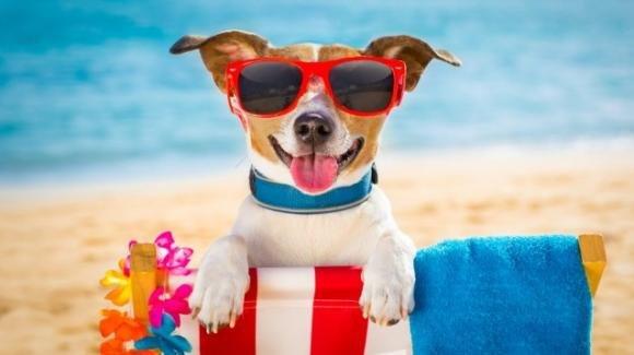 Cani e vacanze, le dritte per vivere le ferie in armonia con i propri animali