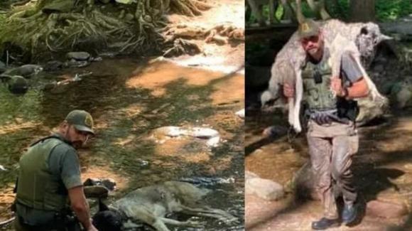 Cane rischia la morte per disidratazione, salvato da un ranger