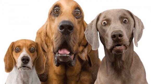 """Nasce """"Doggami"""", il Tinder per cani. Già 600 iscritti in poche settimane"""