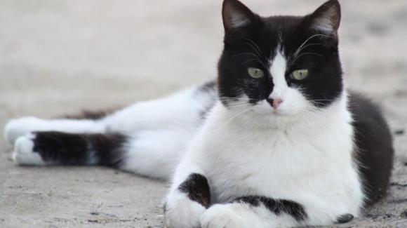 Dopo 12 anni ritrovano il gatto che era fuggito durante il trasloco