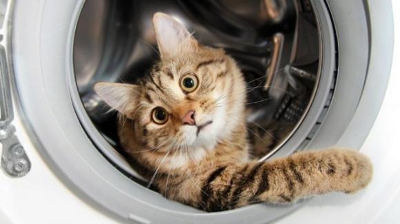 Oscar, il gatto finito per errore in lavatrice e salvato tempestivamente: oggi si siede e osserva i cicli di lavaggio