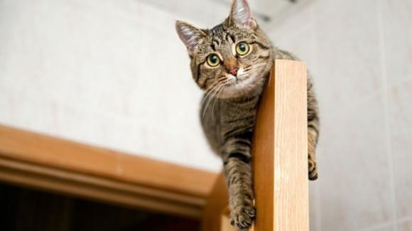 I gatti dormono nei posti più alti della casa, eccone i motivi