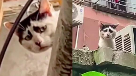 Il gatto più triste del mondo vive a Shangai