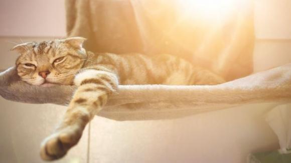 Caldo, i rimedi per il nostro amico felino