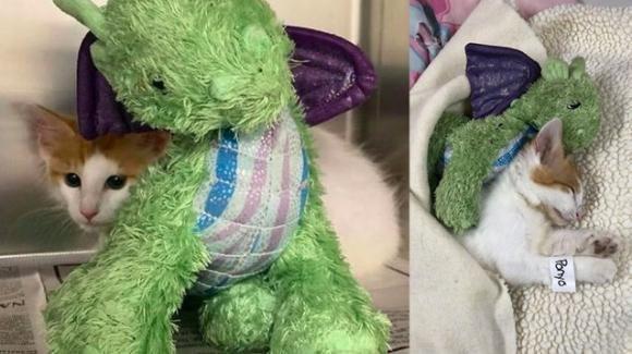 Gatto rimasto orfano trova un'insolita guardia del corpo, un drago di pezza