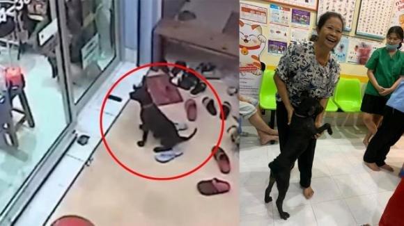 Cane smarrito riconosce la clinica in cui la sua proprietaria l'aveva portato