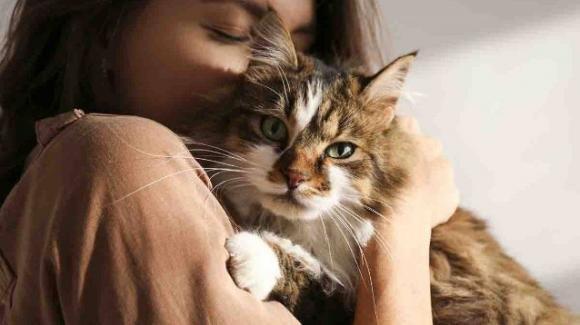 Parlare al gatto è un segno distintivo, lo dice la scienza