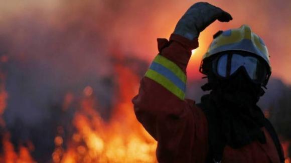 """Portogallo, decine di animali morti in un incendio: """"Nessuno ha aperto le gabbie per farli scappare"""""""