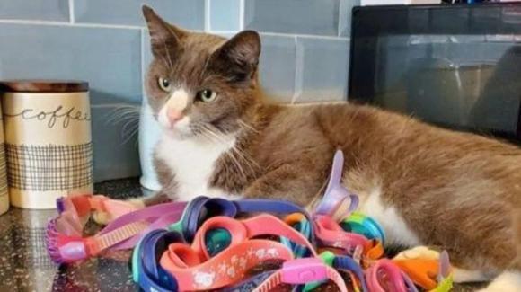 Bristol, gatto torna a casa quotidianamente con occhialini da nuoto: è mistero sulla provenienza