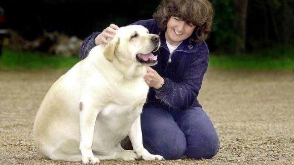 Quando il padrone è obeso, anche il cane sarà sovrappeso