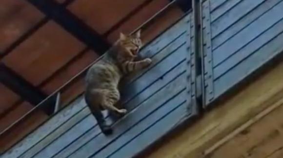 Varese, gatto appeso sul balcone: provvidenziale l'intervento dei vigili del fuoco