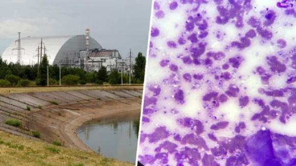 Il fungo antiradiazioni di Chernobyl verrà utilizzato per colonizzare Marte
