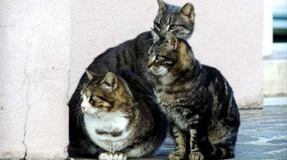"""Crema, un'intera colonia di gatti è stata sfrattata. La denuncia della donna che se ne occupava: """"Non li vogliono più"""""""