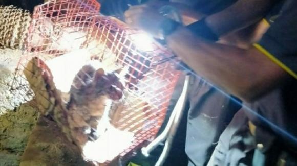 Gattino finisce in un pozzo, salvato dai Vigili del Fuoco grazie ad una tecnica speciale