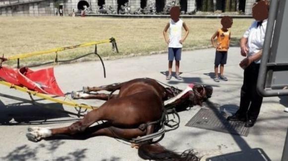 """Reggia di Caserta, muore un cavallo per il troppo caldo. L'ENPA attacca: """"Basta con le botticelle"""""""