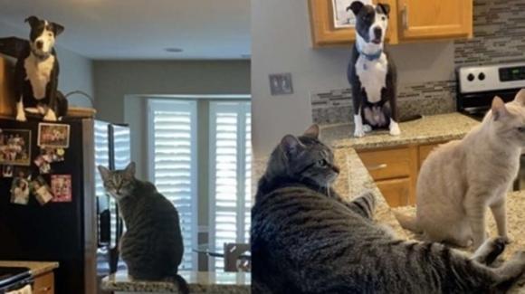 Mako, il cane che si comporta come un gatto: sta spopolando su Instagram e Tik Tok