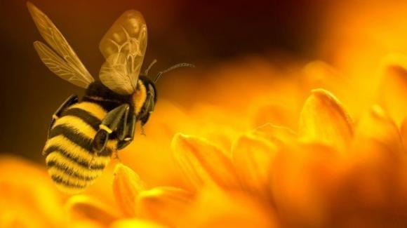 Il veleno delle api può uccidere le cellule del tumore al seno