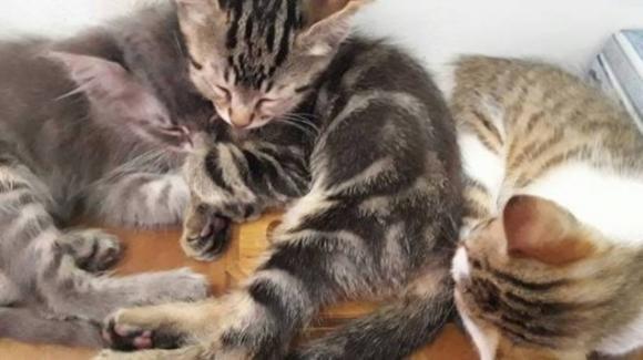 Parma, quattro gattini gettati nella spazzatura come rifiuti