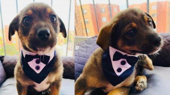 """Cucciolo pronto per l'adozione aspetta i nuovi padroni in """"smoking"""", ma non si presentano"""