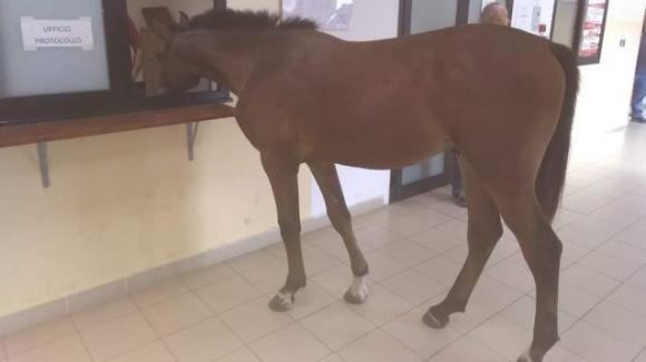 Gioia Tauro: cavallo raggiunge lo sportello del comune