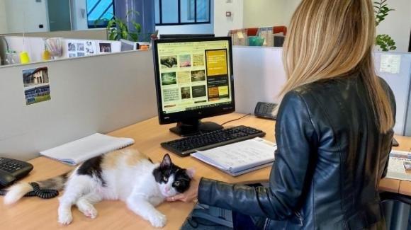 """Rozzano, il comune assume due gatti in ufficio: """"Portano allegria"""""""
